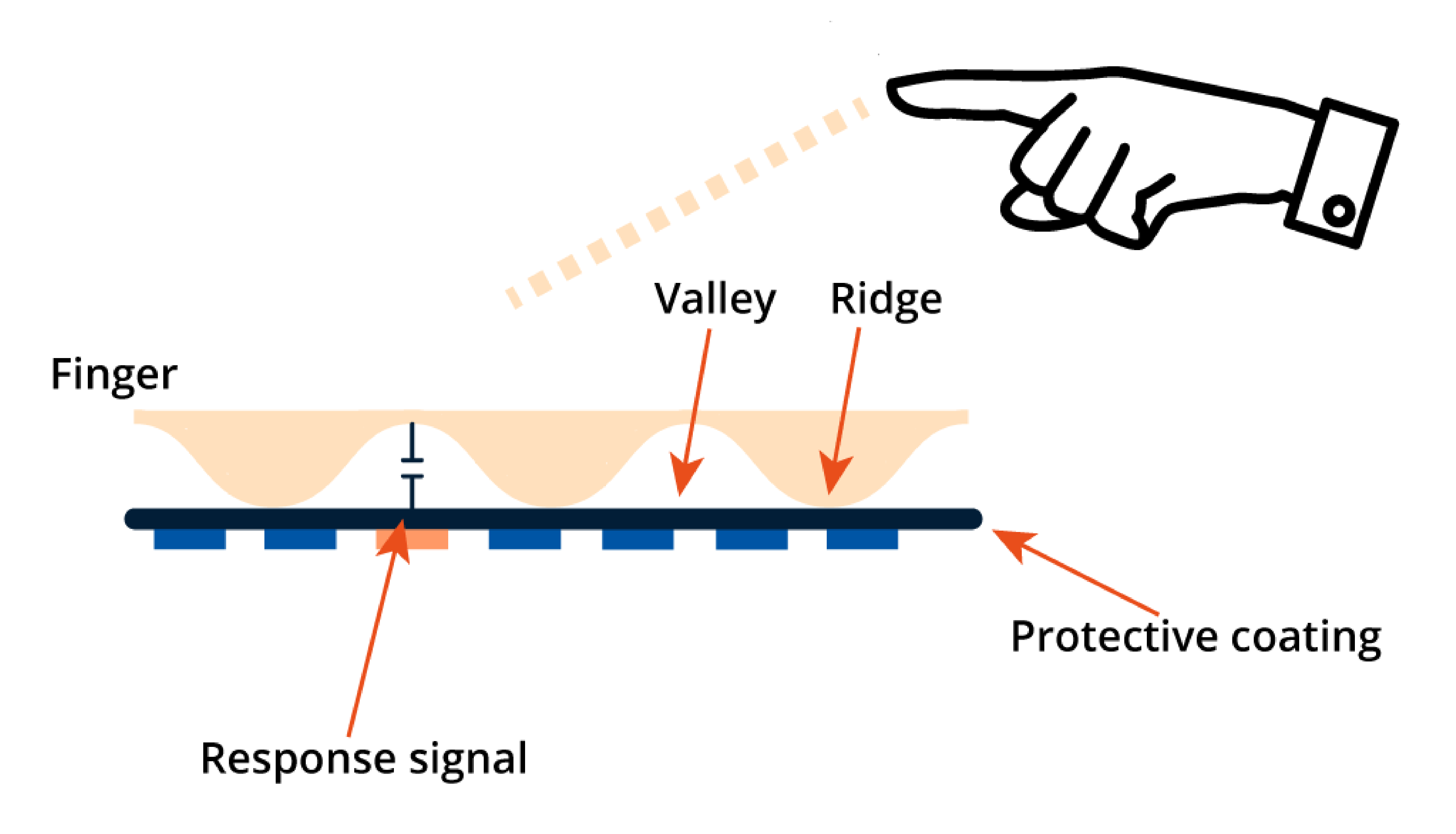 Fingerprint Scanner Technology | Argus Security Solutions
